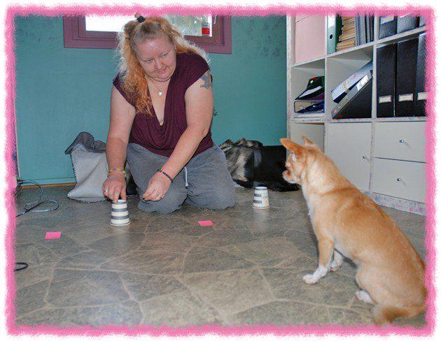 Ayla følger nøye med på hvor godbiten puttes, før hun blir snudd rundt så hun ikke ser at jeg bytter om koppene.