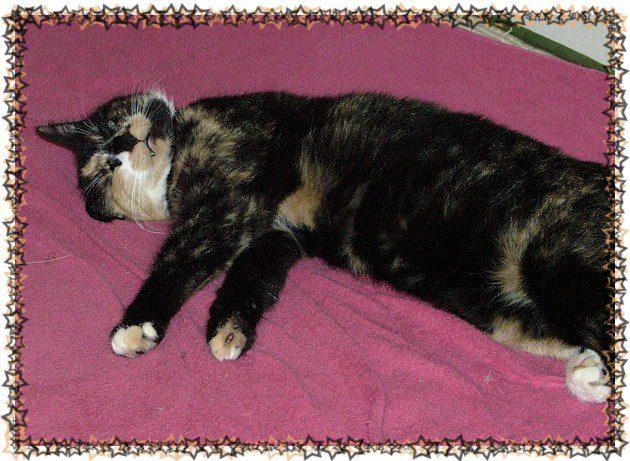 Selv om hun vanligvis likte å sove trangt og mørkt, måtte hun demonstrere at hun ikke var redd for angrep. Ingen av undersåttene hadde våget det.
