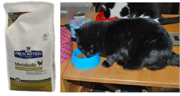 Vi håper at Ozzy går ned i vekt uten å gå konstant sulten.